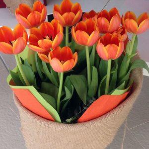 debby-tulips-55