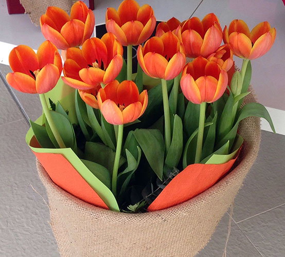 Debby Tulips