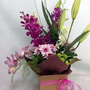 oriental-orchid-box-75