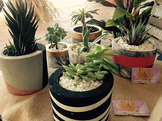 Various Concrete Pots with Succulents Starting from