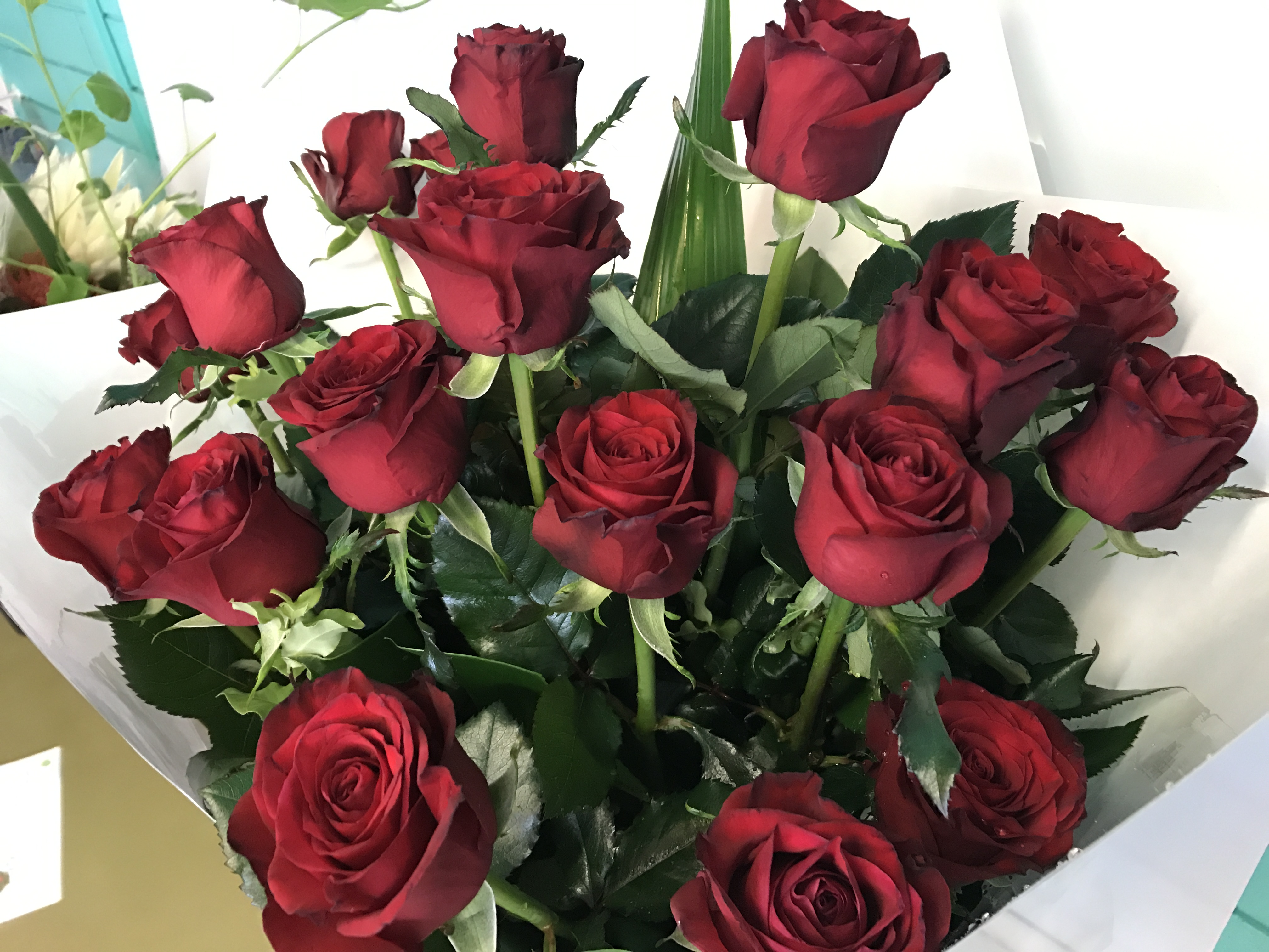 18 Premium Red roses in a presentation style bouquet